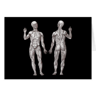 Human Anatomy - The Muscular System Card