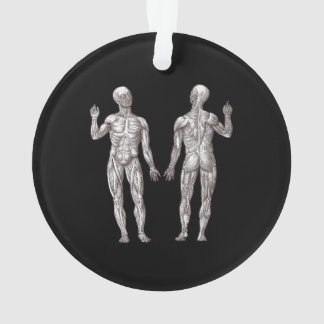 Human Anatomy - The Muscular System Ornament