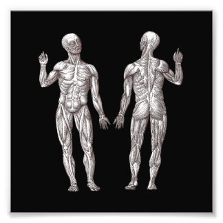 Human Anatomy - The Muscular System Photo Print