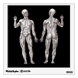 Human Anatomy - The Muscular System Wall Decal