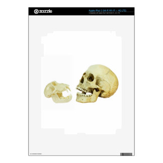 Human and monkey skull opposite of each other decal for iPad 3