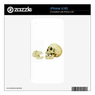 Human and monkey skull opposite of each other decals for iPhone 4S