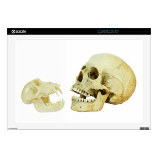 Human and monkey skull opposite of each other laptop skins
