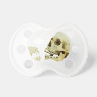 Human and monkey skull opposite of each other pacifier