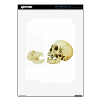 Human and monkey skull opposite of each other skins for the iPad 2