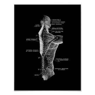 Human Back Anatomy in Black and White Print