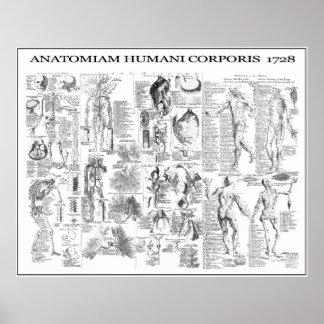 HUMAN BODY ANATOMY  1728 POSTER