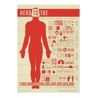Human Body in Numbers Poster