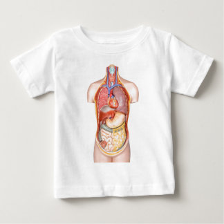 Human body model with organs isolated on white baby T-Shirt
