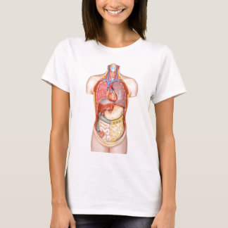 Human body model with organs isolated on white T-Shirt
