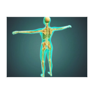 Human Body Showing Skeletal System, Arteries 2 Stretched Canvas Prints
