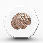 """human brain acrylic award<br><div class=""""desc"""">just a picture of the human brain</div>"""