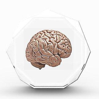 human brain acrylic award