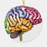 Human brain anatomy sectioned Double-Sided ceramic round christmas ornament