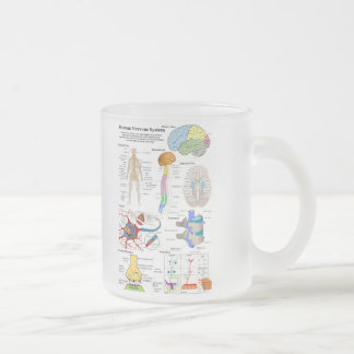 Human Brain and Central Nervous System Diagram 10 Oz Frosted Glass Coffee Mug