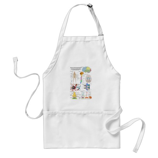 Human Brain and Central Nervous System Diagram Adult Apron