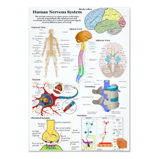 Human Brain and Central Nervous System Diagram Card