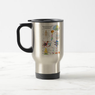 Human Brain and Central Nervous System Diagram 15 Oz Stainless Steel Travel Mug