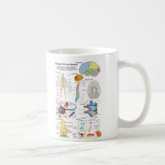 Human Brain and Central Nervous System Diagram Classic White Coffee Mug
