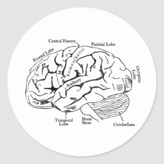 Human Brain Classic Round Sticker