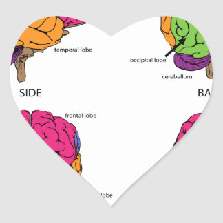 Human brain from all sides heart sticker
