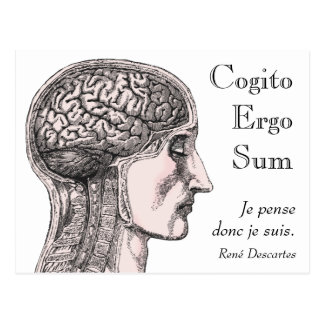 Human Brain Illustration Cogito Ergo Sum Postcard
