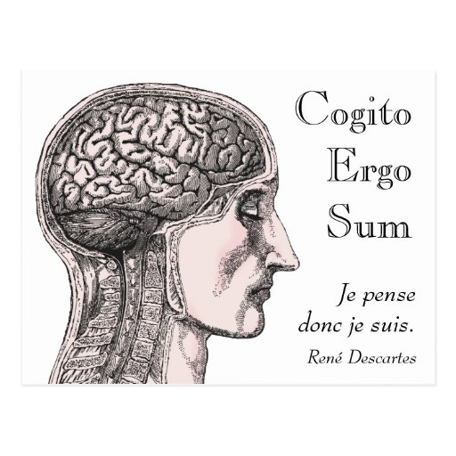 Human Brain Illustration Cogito Ergo Sum Postcard