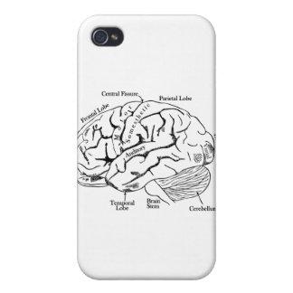 Human Brain iPhone 4 Case