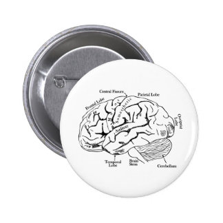 Human Brain Pinback Button