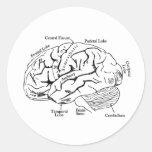 Human Brain Round Stickers