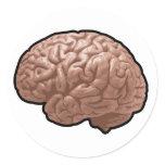 human brain, brain, human, anatomy, organ,