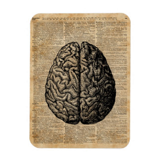 Human Brain Vintage Illustration Dictionary Art Magnet