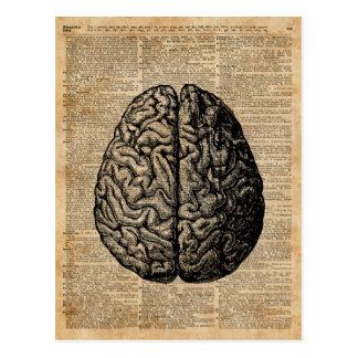 Human Brain Vintage Illustration Dictionary Art Postcard
