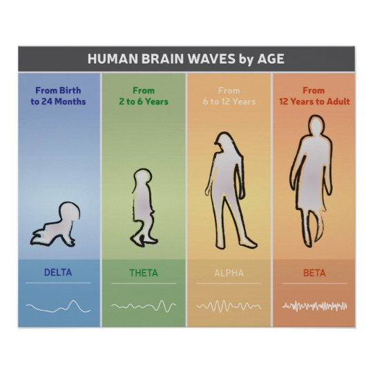 Human Brain Waves By Age Chart Diagram Multicolor Zazzle Com
