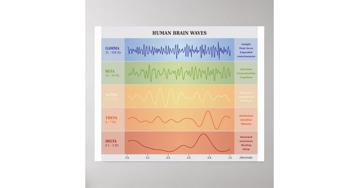 Human Brain Waves Diagram