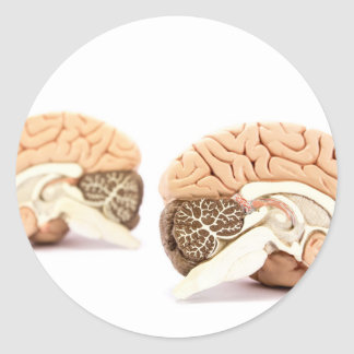 Human brains model isolated on white background classic round sticker