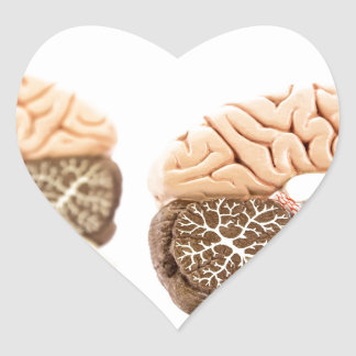 Human brains model isolated on white background heart sticker