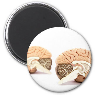 Human brains model isolated on white background magnet
