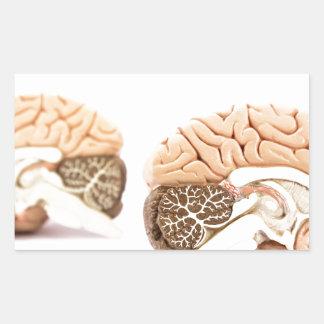 Human brains model isolated on white background rectangular sticker
