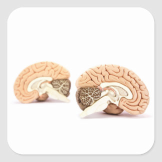 Human brains model isolated on white background square sticker