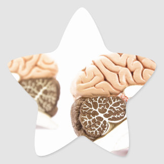 Human brains model isolated on white background star sticker