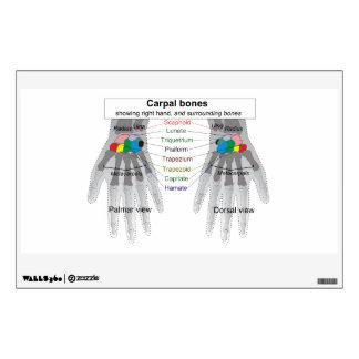 Human Carpus Bone Structure Diagram Wall Sticker