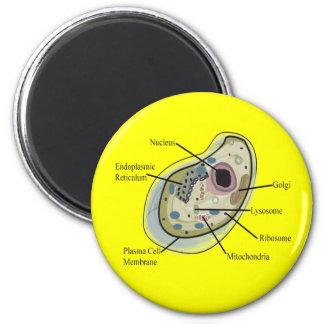 Human Cell Biology T-Shirts Magnet