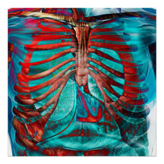 Human chest poster