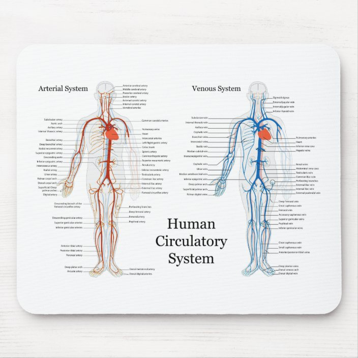human circulatory system diagram human circulatory system of arteries and veins mouse pad zazzle  arteries and veins mouse pad