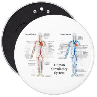 Human Circulatory System of Arteries and Veins Pinback Button