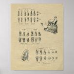 Human Dental Anatomy 1902 Vintage Print