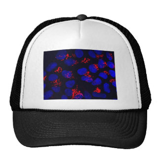Human embryonic stem cells trucker hat