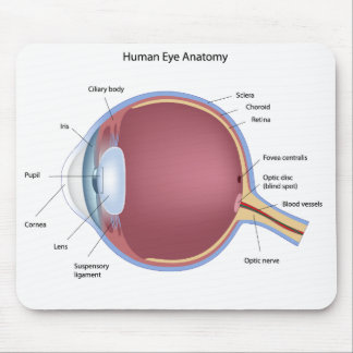Human Eye Anatomy Mousepad