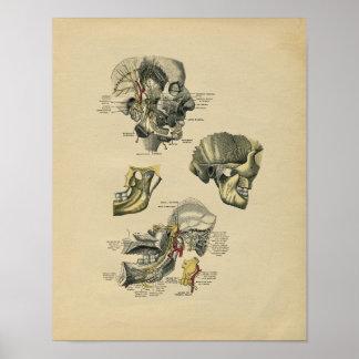 Human Face TMJ Anatomy 1902 Vintage Print